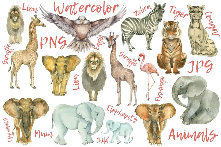 African animals collection. 15 items