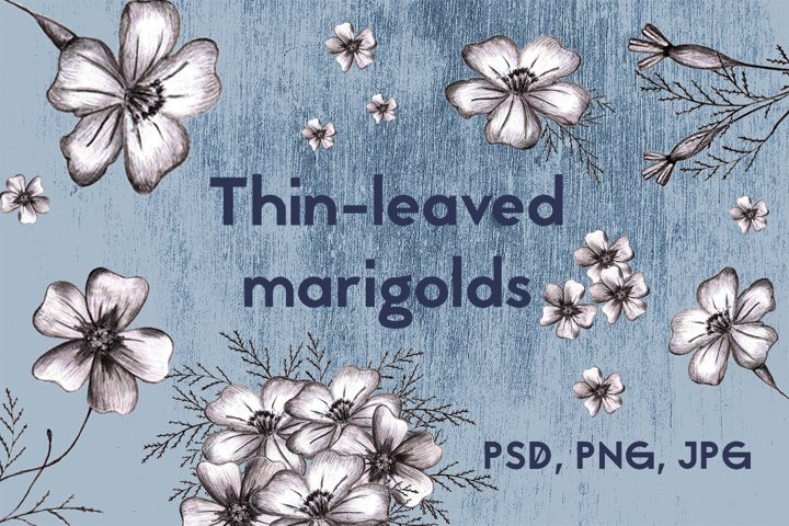 Hand-drawn marigolds graphic collection.