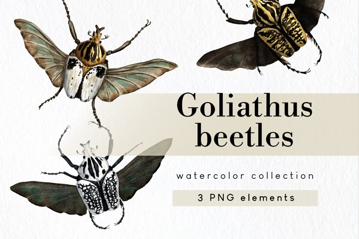 Tropical insect bug clipart set, goliath beetle clip art