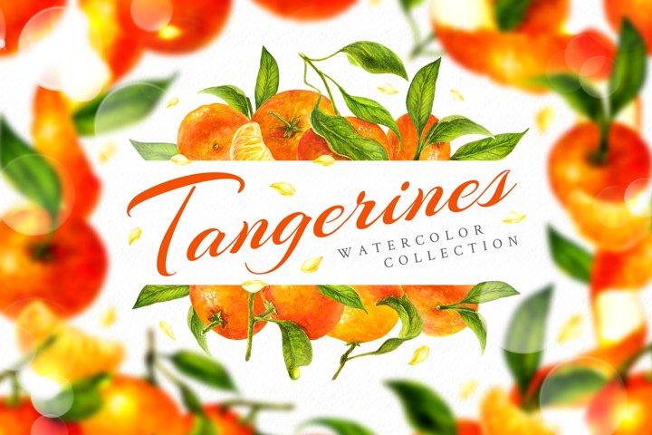 Tangerines watercolor clip art