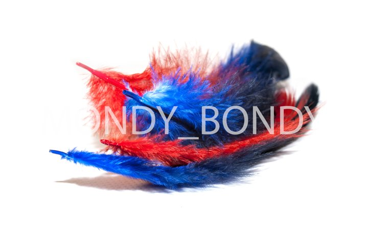 Red and blue fluffy feather on a white background. copy spac