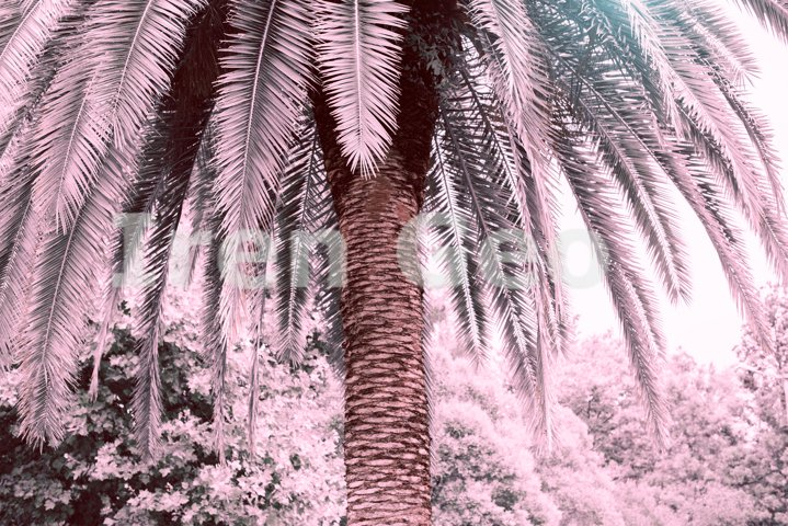 Tropical background with palm trees in sun light