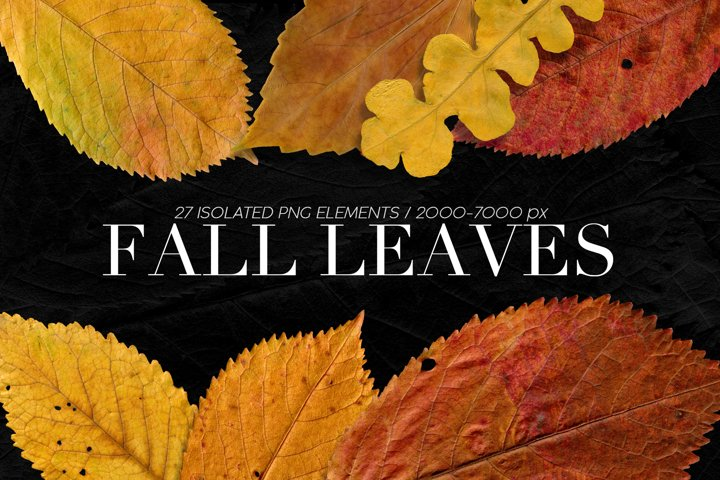 Isolated Fall Leaves