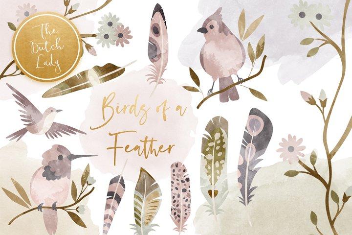 Birds & Feathers Clipart Set