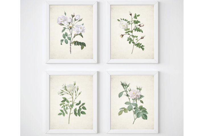 White Rose Print, Set of 4 Wall Art, Living Room Print Set