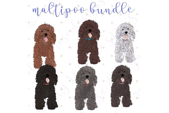 Glitter and Glam Maltipoo dogs in six shades
