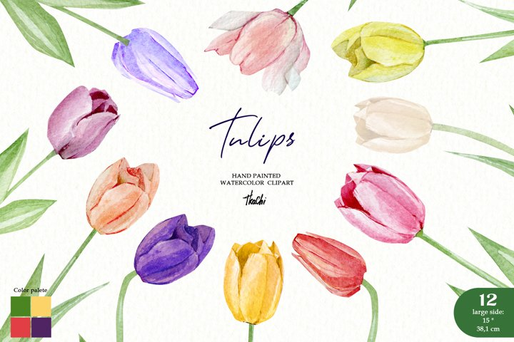 Watercolor Tulips set clipart. Spring floral bouquet png