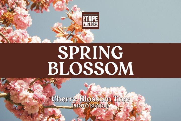 Spring Blossom Photo Bundle - Cherry Tree w/BONUS LR preset
