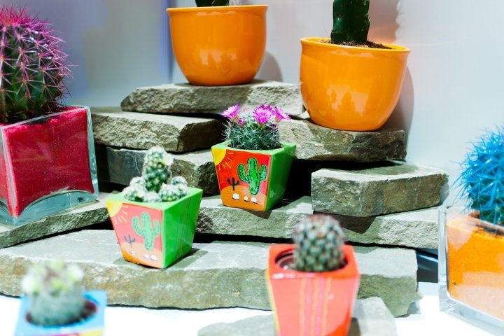 Cacti are in a pot on the windowsill.