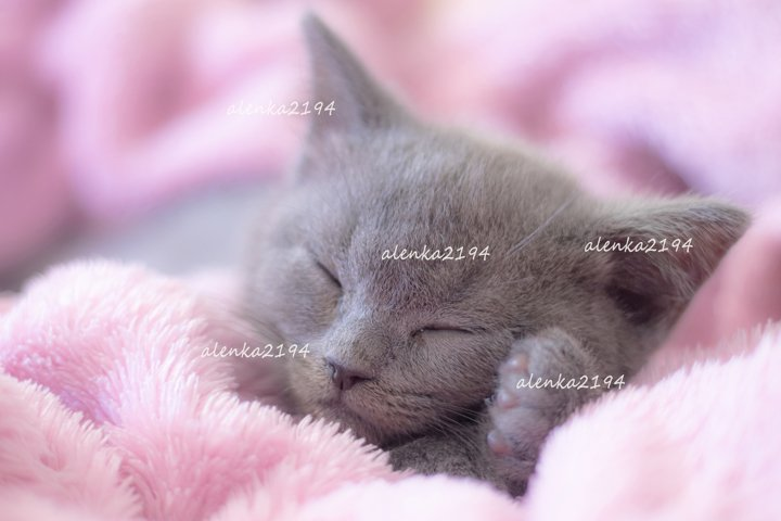 Little cute kitten sleeps on the bedspread.