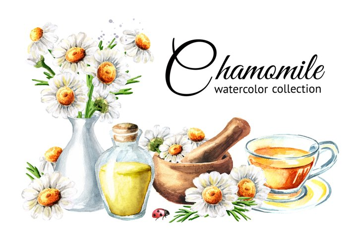 Chamomile. Watercolor collection