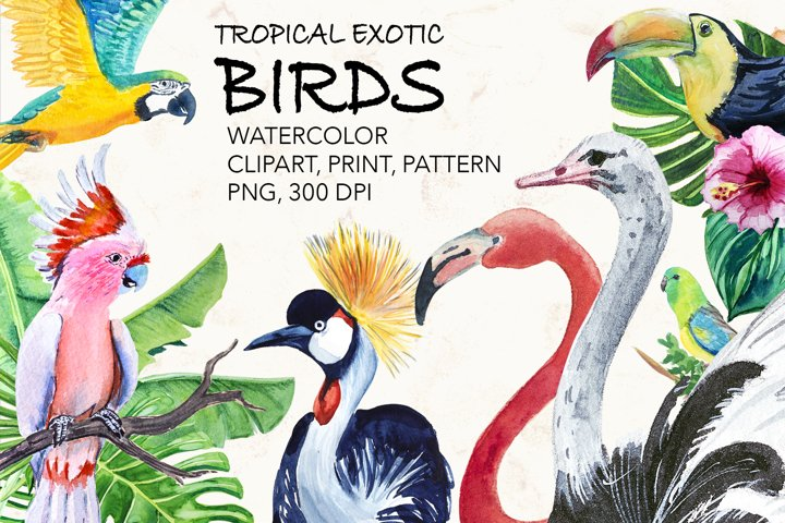 Watercolor exotic BIRDS. Parrots, ostriches, toucan, flaming