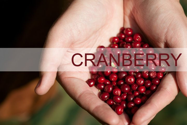 Hands holding red cranberry on green natural background