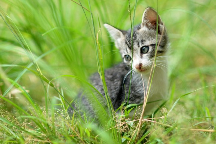 cute kittens on the grass