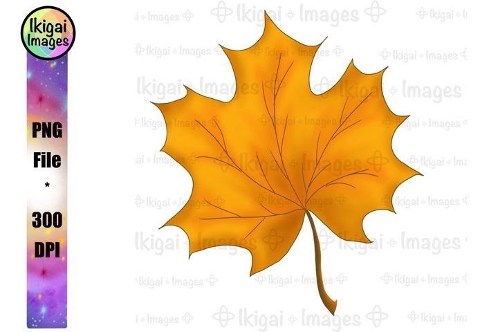 Leaf PNG, Autumn Leaves, Fall Sublimation, Rustic Clipart