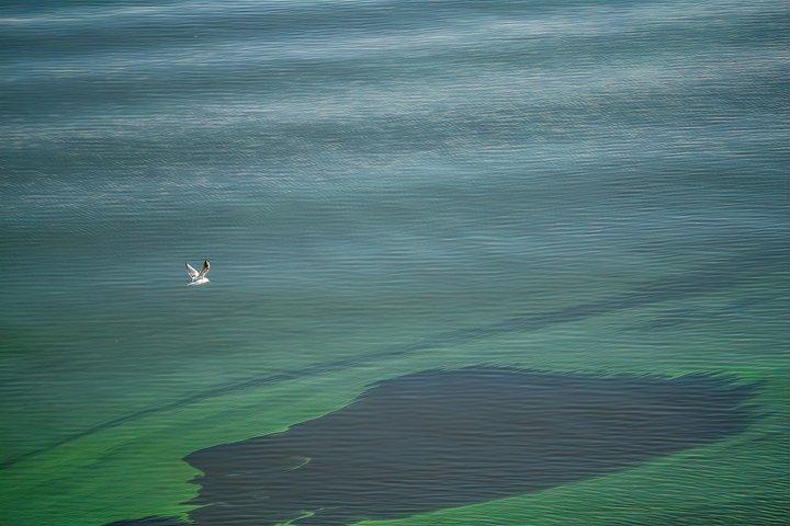 Blooming green diatoms. Swampy lake
