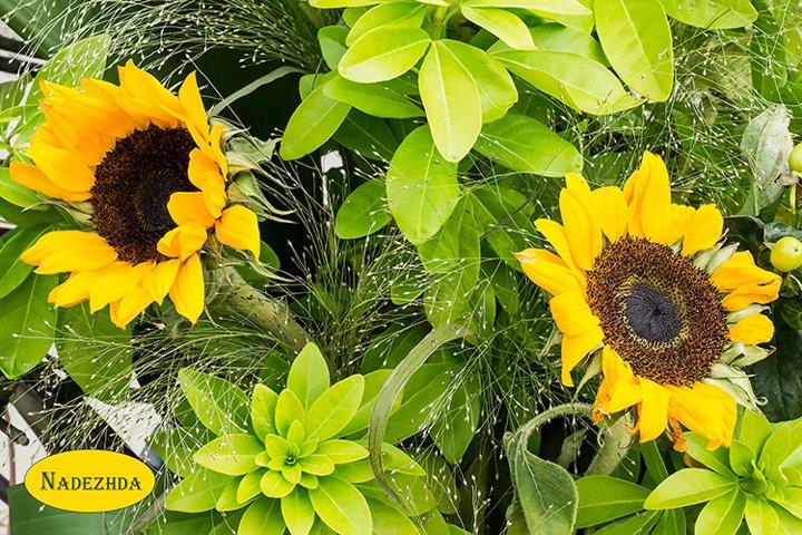 Bright bouquet of flowers sunflower