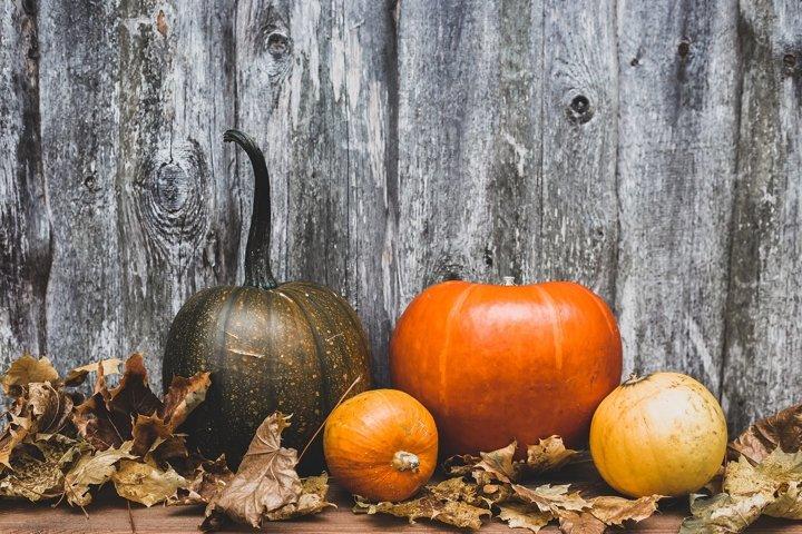 autumn still life or concept of decorative pumpkins