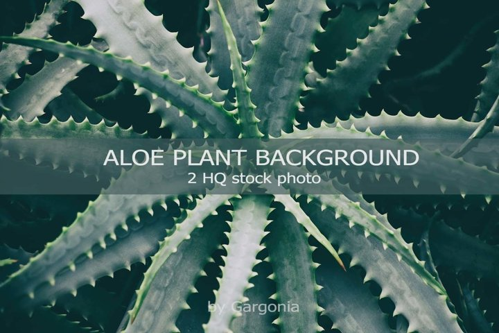 Aloe succulent plant background 2 HQ Stock Photo