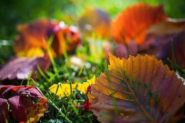 Leaves in various autumnal colors close up