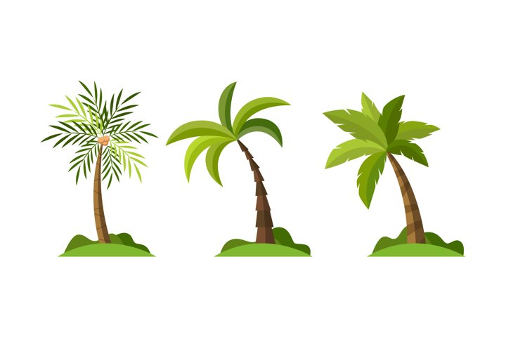 Palm Tree Illustrations