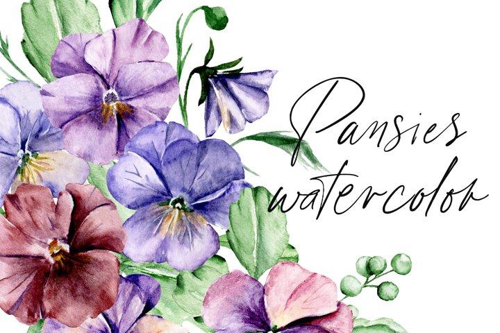 Watercolor flowers pansies set, floral illustration.