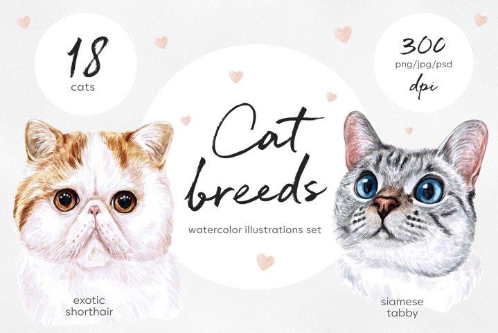 Watercolor 18 cat breeds illustrations. Cute cat. Meow.