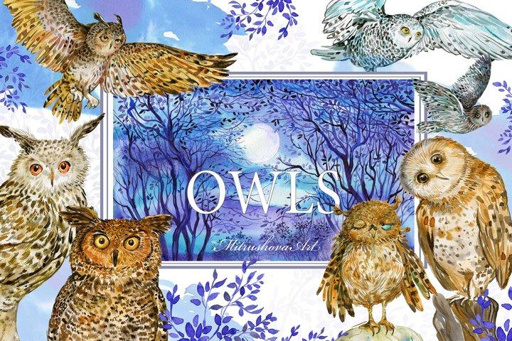 Owls Watercolor clipart Illustration