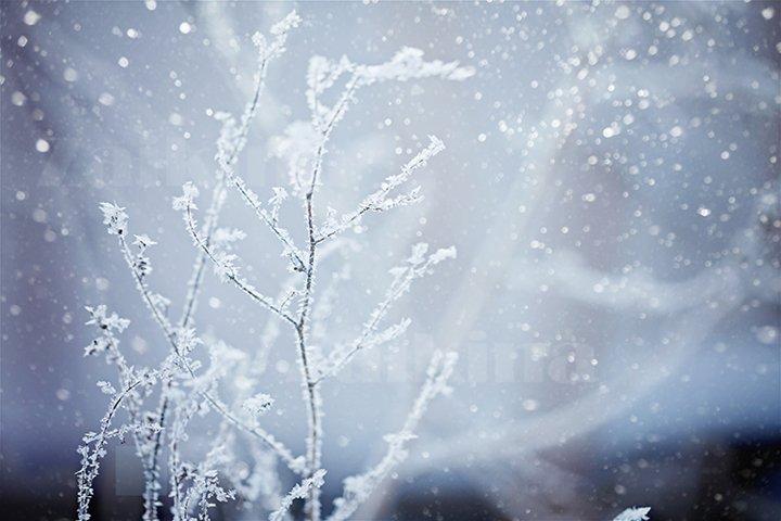 Winter landscape.Winter scene. Frozenned plants.