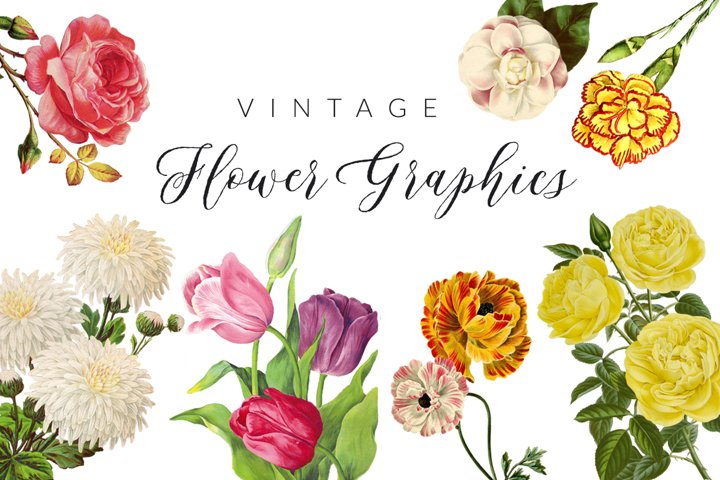 Vintage Flower Illustrations
