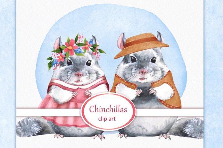 Chinchillas, 4 png animals. Watercolor clip art