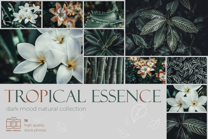 Tropical Essence. Photo bundle