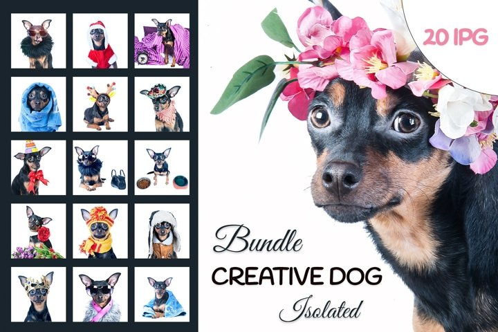 Creative dog isolated 20JPG