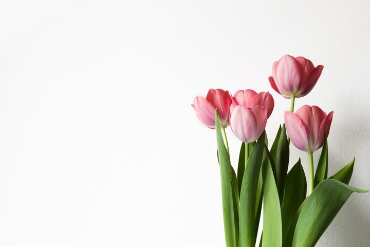Pink tulips bouquet.
