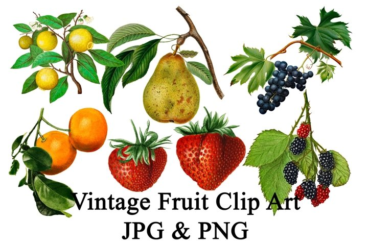 Vintage Fruit Clip Art Bundle