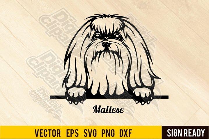 Peeking Maltese DOG SVG Clipart Vector Cut