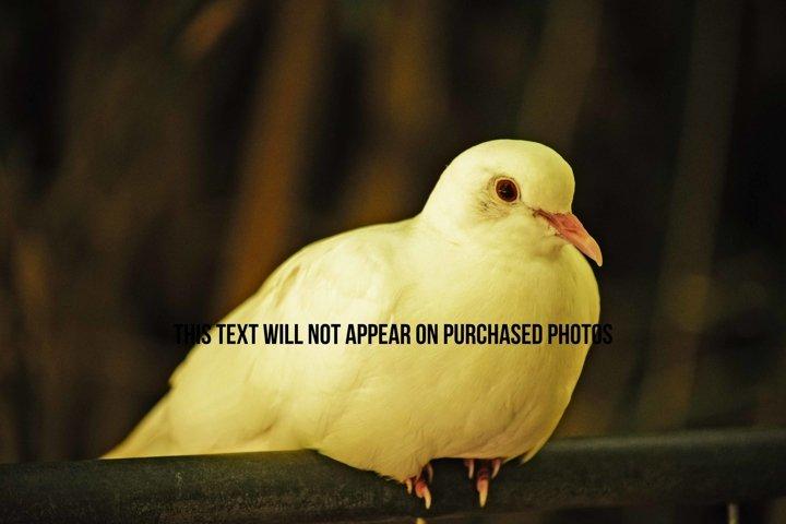 9 Beautiful Birds example 3