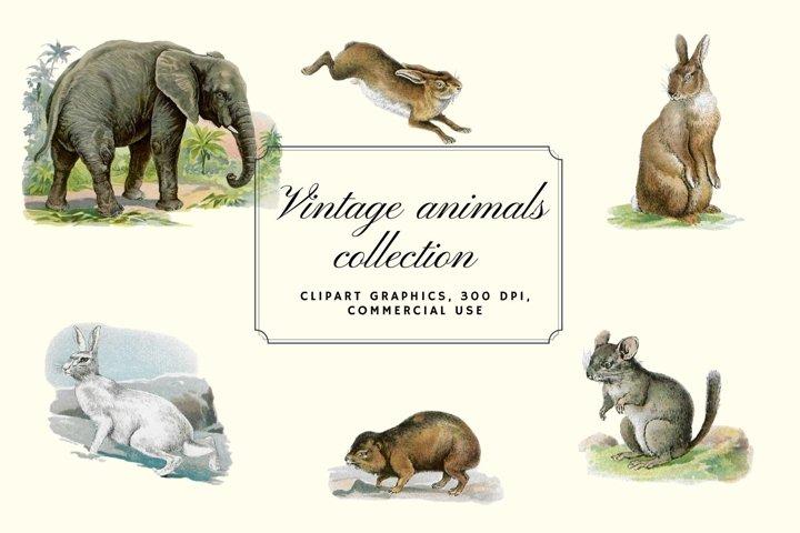 Antique Animal Clipart Set, Vintage Elephant Clipart Graphic
