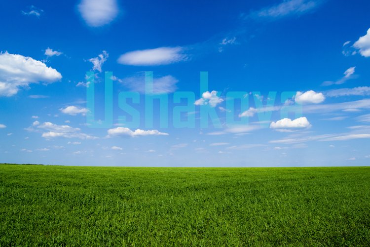 Green field. Blue sky and white clouds. Good weather.