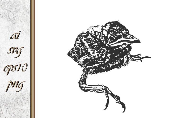 Doodle bird Sketch animal Hand drawn vector