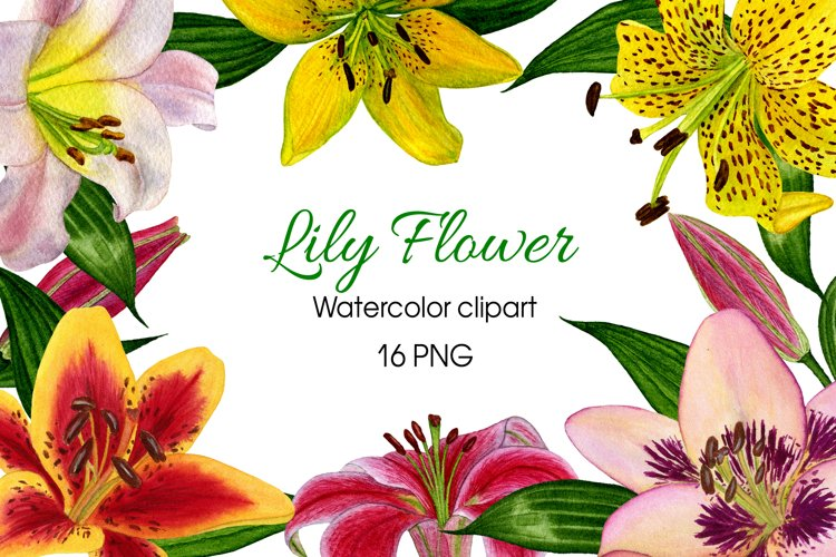 Lily Flower Watercolor Clipart Collection