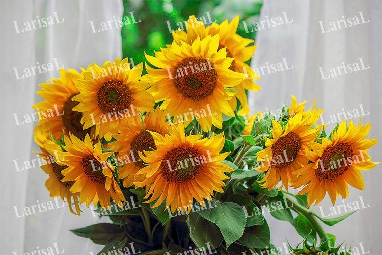Sunflowers, bouquet, white curtains, open window. Summer.