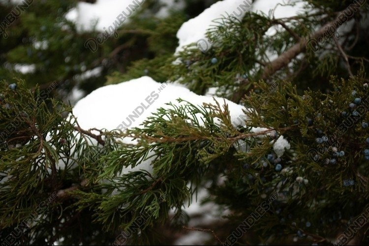 Snowy Pine Branches example image 1
