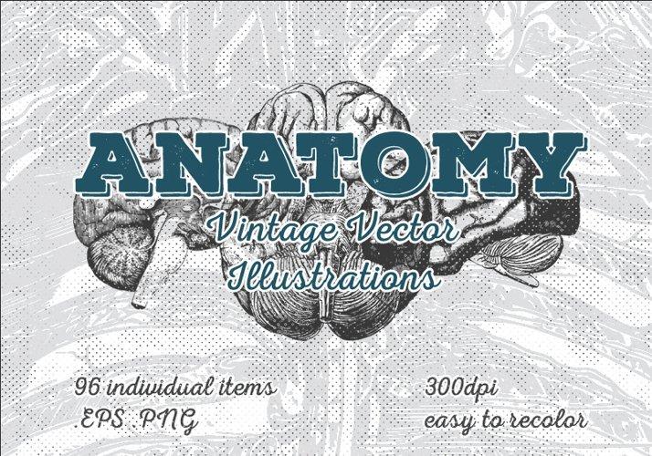 Vintage Anatomy Vector Illustrations 96 Items