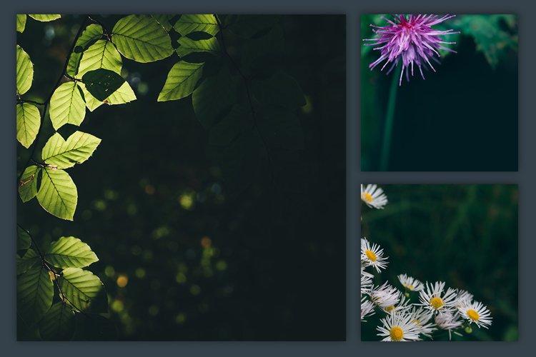 Instagram Photo Pack - Flora Vol. 1 example 3