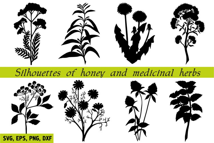 Silhouettes of honey and medicinal herbs. Meadow herbs SVG