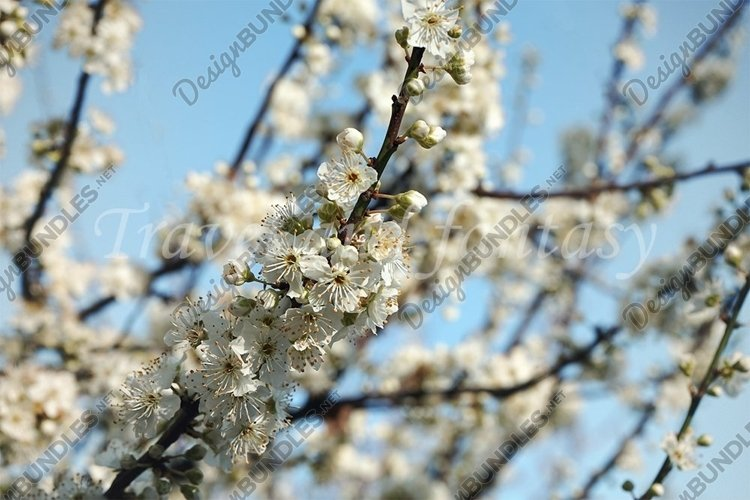 Natural floral background of a blooming fruit tree. example image 1