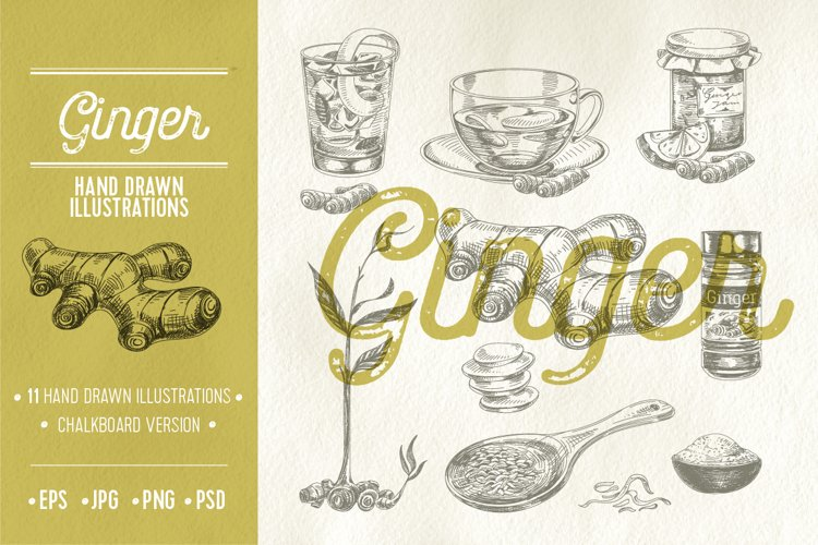 Vector hand drawn ginger illustrations
