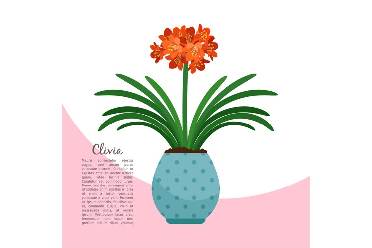 Clivia plant in pot banner example image 1