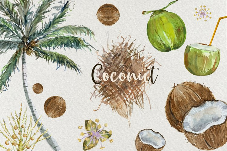 Coconut Life Cycle Clip Arts and Print